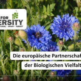 Schulungsmaterialien zum Thema Biologische Vielfalt im Weinbau steht jetzt zum Download bereit