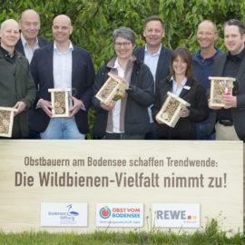 Wildbienen-Vielfalt nimmt zu: Obstbauern am Bodensee schaffen Trendwende