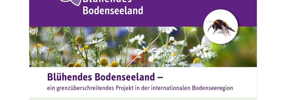 Förderung von blütenbesuchenden Insekten in Kommunen