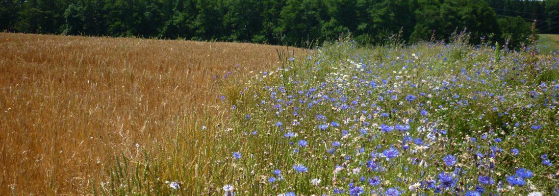 Biodiversität praxisnah gestalten – ein Interview