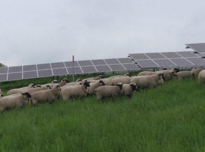 """EINLADUNG """"Ökopunkte für Photovoltaik Freiflächenanlagen - Maßnahmen und Akzeptanz"""""""